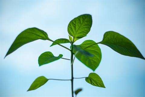 nature-plant-morning-green.jpg